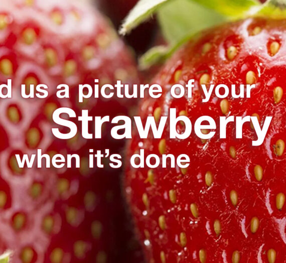 Send us a picture of your Strawberry!